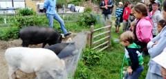 L'animal le plus propre de la ferme